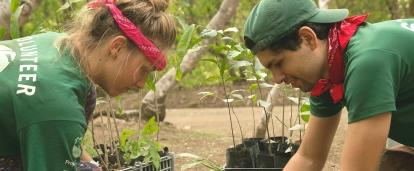 Projects Abroad volunteers planting seedlings during Conservation volunteering in Costa Rica for teenagers.